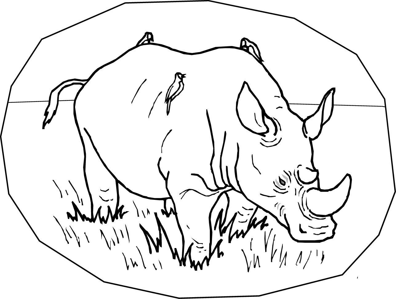 Dibujos De Fre Fire Para Pintar: Dibujos Para Pintar De Rinocerontes :: Imágenes Y Fotos