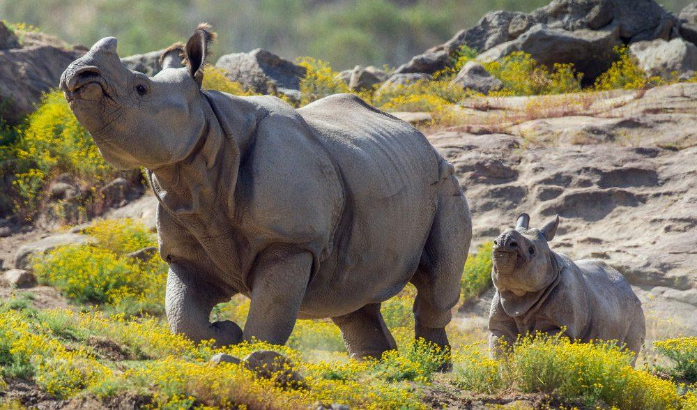 Imágenes bonitas de rinocerontes :: Imágenes y fotos