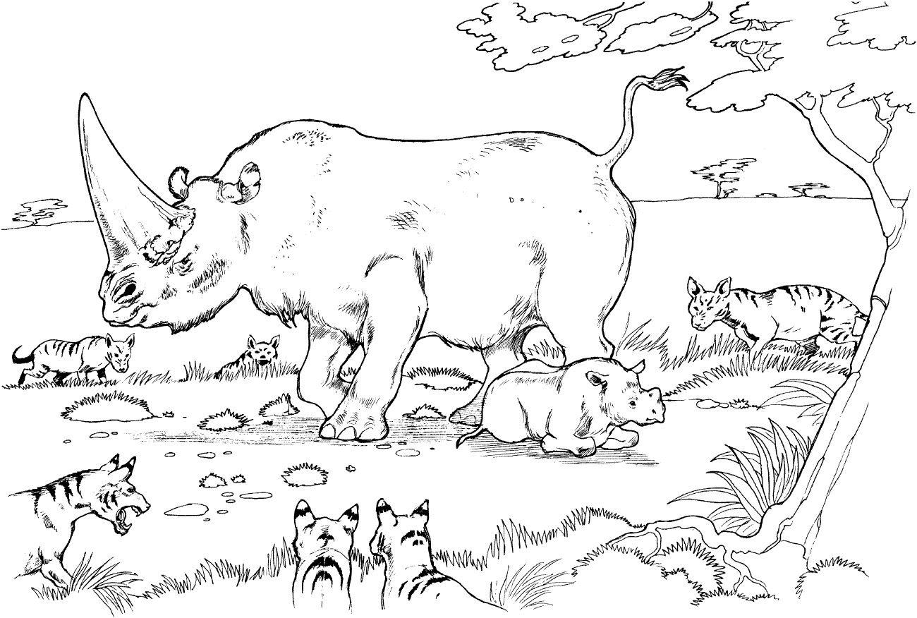 Rinocerontes para colorear :: Imágenes y fotos